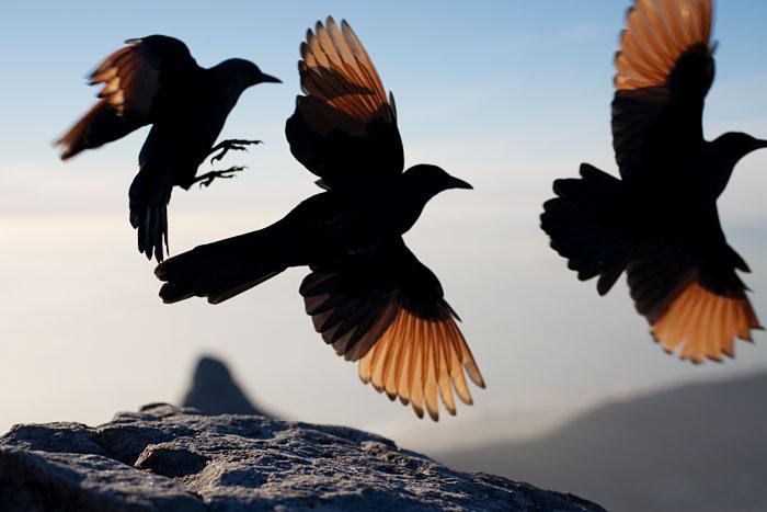 3 vogels3