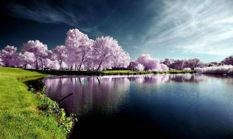 nature-a-charming-scene