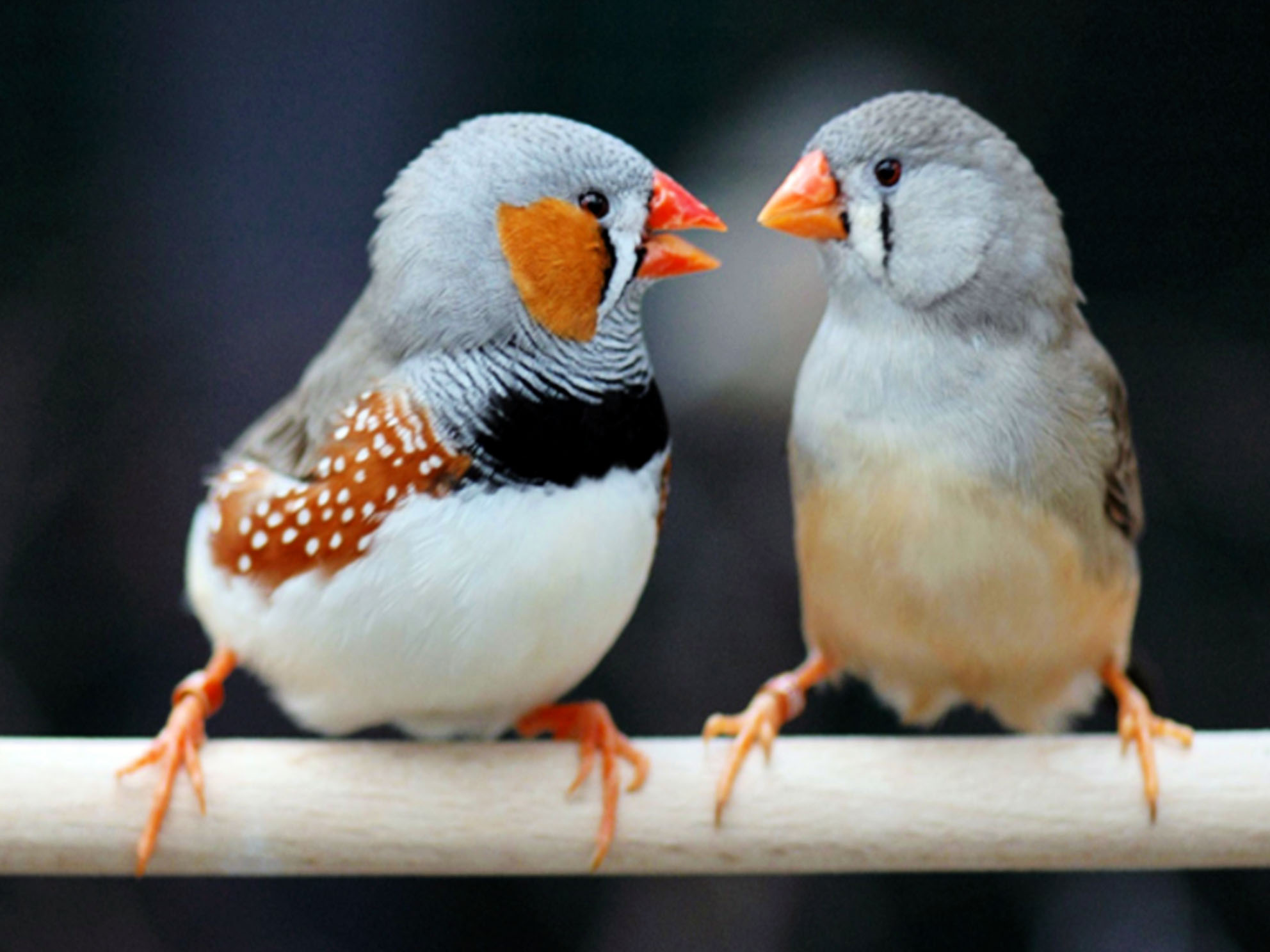 vogel 28