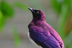 vogel10